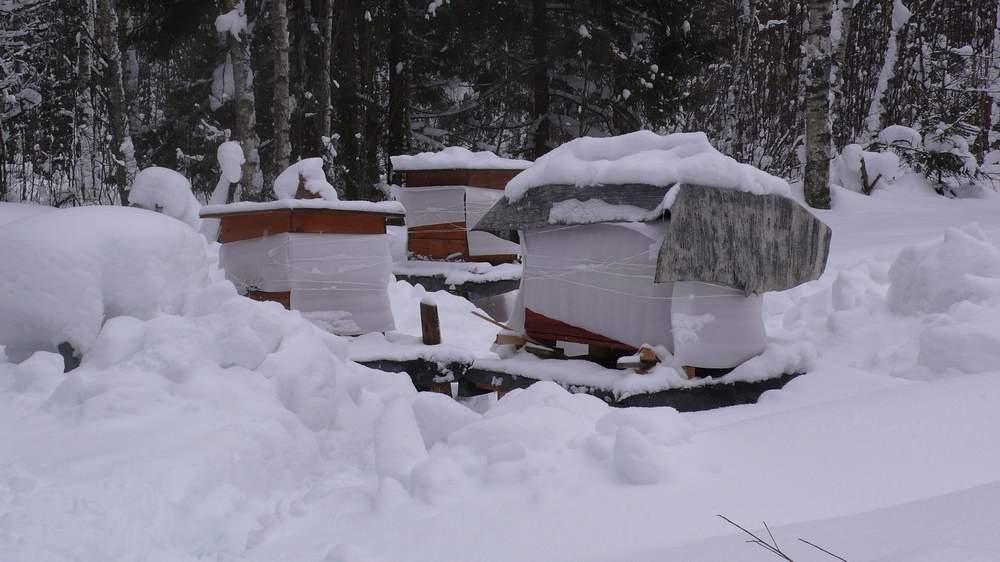 Дадановские ульи в конце марта после очистки от снега.